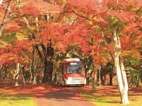 広い敷地内の移動は駅前から無料で乗車できる周遊バスがおすすめ。ベビーカーでも乗車できます。