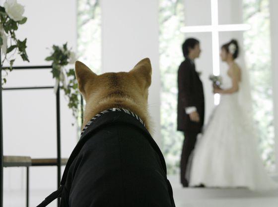 ペットも大切な家族 挙式に立ち会ってもらおう